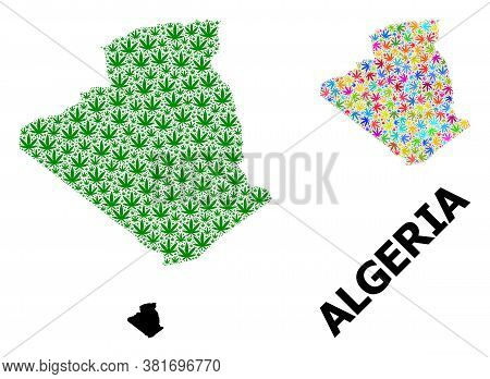 Vector Marijuana Mosaic And Solid Map Of Algeria. Map Of Algeria Vector Mosaic For Marijuana Legaliz