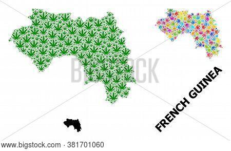 Vector Marijuana Mosaic And Solid Map Of French Guinea. Map Of French Guinea Vector Mosaic For Canna