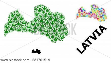 Vector Cannabis Mosaic And Solid Map Of Latvia. Map Of Latvia Vector Mosaic For Cannabis Legalize Ca
