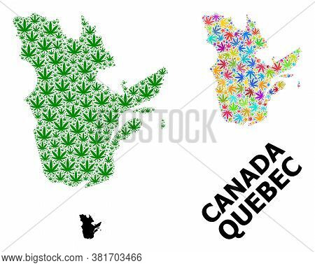Vector Weed Mosaic And Solid Map Of Quebec Province. Map Of Quebec Province Vector Mosaic For Weed L