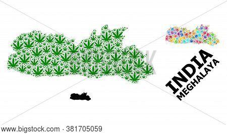Vector Weed Mosaic And Solid Map Of Meghalaya State. Map Of Meghalaya State Vector Mosaic For Weed L