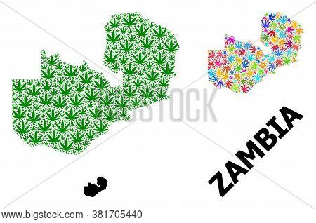 Vector Hemp Mosaic And Solid Map Of Zambia. Map Of Zambia Vector Mosaic For Hemp Legalize Campaign.