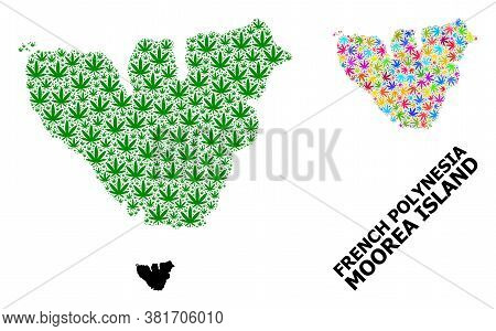 Vector Weed Mosaic And Solid Map Of Moorea Island. Map Of Moorea Island Vector Mosaic For Weed Legal