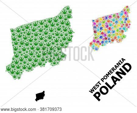 Vector Weed Mosaic And Solid Map Of West Pomerania Province. Map Of West Pomerania Province Vector M