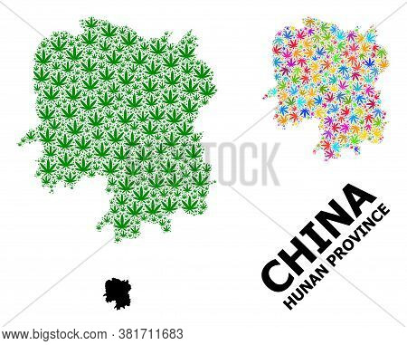 Vector Weed Mosaic And Solid Map Of Hunan Province. Map Of Hunan Province Vector Mosaic For Weed Leg