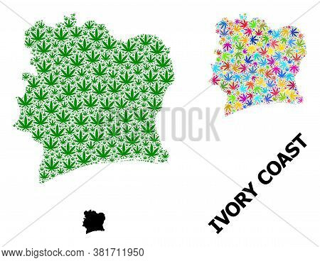 Vector Hemp Mosaic And Solid Map Of Ivory Coast. Map Of Ivory Coast Vector Mosaic For Hemp Legalize