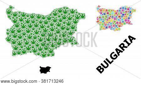Vector Marijuana Mosaic And Solid Map Of Bulgaria. Map Of Bulgaria Vector Mosaic For Hemp Legalize C