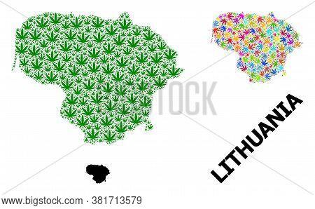 Vector Marijuana Mosaic And Solid Map Of Lithuania. Map Of Lithuania Vector Mosaic For Weed Legalize