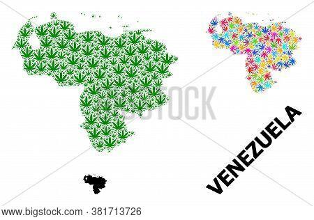 Vector Hemp Mosaic And Solid Map Of Venezuela. Map Of Venezuela Vector Mosaic For Hemp Legalize Camp