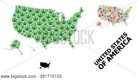 Vector Weed Mosaic And Solid Map Of Usa Territories. Map Of Usa Territories Vector Mosaic For Hemp L