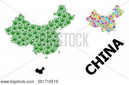 Vector Hemp Mosaic And Solid Map Of China. Map Of China Vector Mosaic For Hemp Legalize Campaign. Ma