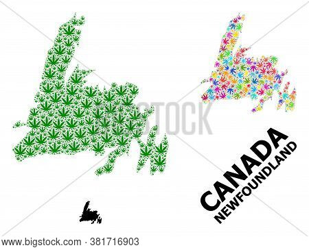 Vector Hemp Mosaic And Solid Map Of Newfoundland Island. Map Of Newfoundland Island Vector Mosaic Fo