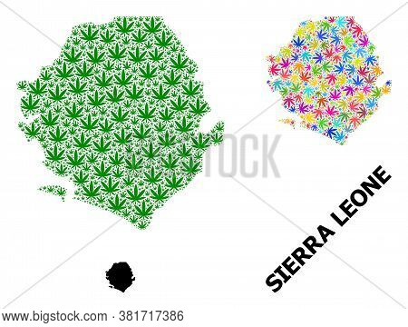 Vector Weed Mosaic And Solid Map Of Sierra Leone. Map Of Sierra Leone Vector Mosaic For Marijuana Le