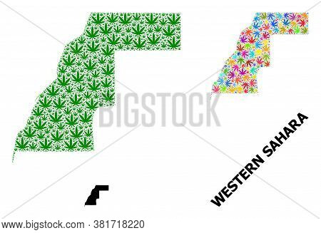 Vector Weed Mosaic And Solid Map Of Western Sahara. Map Of Western Sahara Vector Mosaic For Weed Leg
