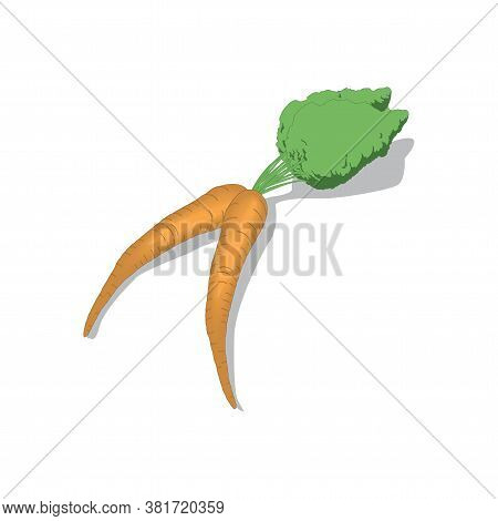 Carrots Vector Illustration Isolated On A White Bacground In Eps10