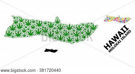 Vector Weed Mosaic And Solid Map Of Molokai Island. Map Of Molokai Island Vector Mosaic For Weed Leg