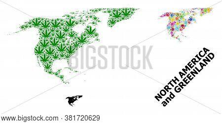 Vector Marijuana Mosaic And Solid Map Of North America And Greenland. Map Of North America And Green