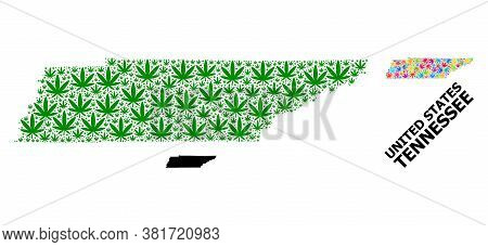 Vector Hemp Mosaic And Solid Map Of Tennessee State. Map Of Tennessee State Vector Mosaic For Weed L