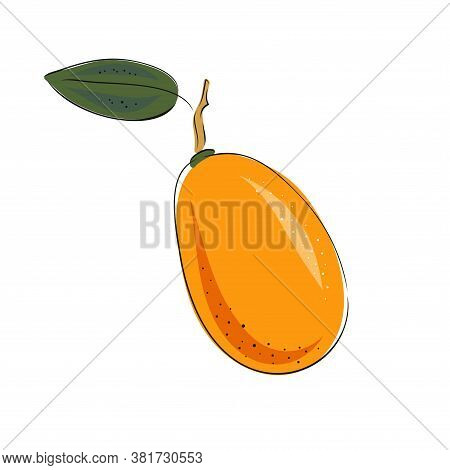 Kumquat Vector Illustration. Whole And Sliced. Colorful Sketch Collection Of Tropical Fruit Isolated