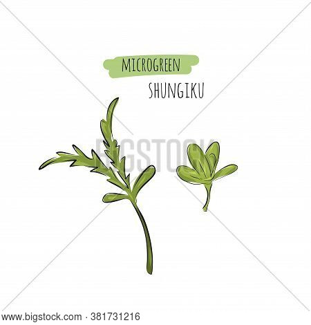 Hand Drawn Shungiku Micro Greens. Vector Illustration In Sketch Style Isolated On White Background