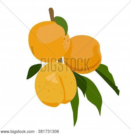 Vector Stock Illustration Of An Apricot. A Ripe Yellow Peach On A Branch. Juicy Green Leaves Of A Pl