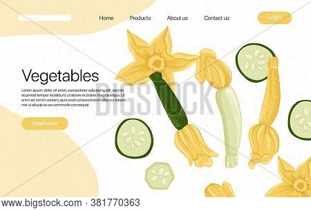 Vector Zucchini Landing Page Template With Text Space. Squash And Zucchini Flowers Cartoon Illustrat