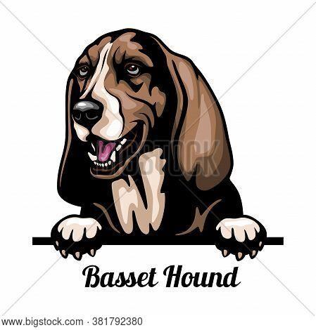 Basset Hound - Color Peeking Dogs - Breed Face Head Isolated On White