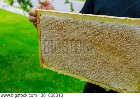 A Beekeeper Holds A Caring For Frames Near The Hives A Man Checks The Hives Beekeeping.