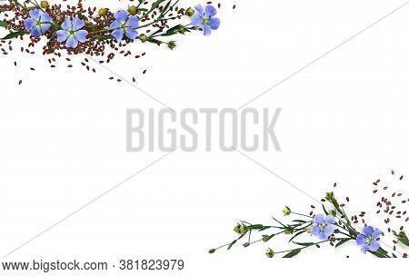 Capsules With Seed Flax And Flowers ( Linum Usitatissimum, Common Flax Or Linseed ) On A White Backg