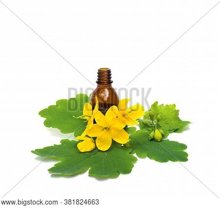 Flowers And Leaves Celandine (chelidonium Majus) With Pharmaceutical Bottle On A White Background. O