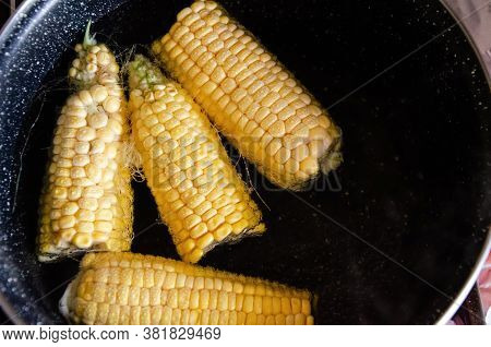 Close-up Corn Swings Are Boiled In A Saucepan. Yellow Boiled Young Corn. Saucepan With Corn Cobs. Sw
