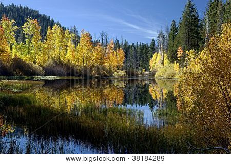 Reflected Autumn Aspen Trees