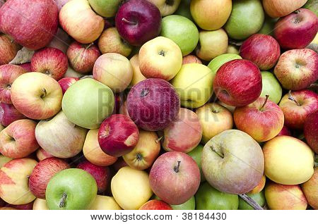 Apples At Harvest