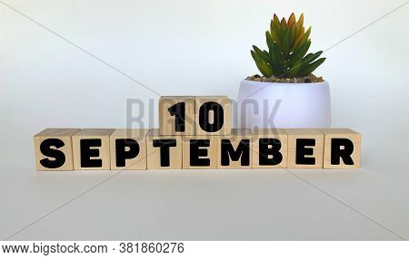 10 September .september 10 On Wooden Cubes On A White Background.pot With A Flower .calendar For Sep