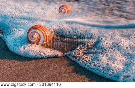 Marine Saracol On The Seashore, Marine Snail In The Foams Of The Sea