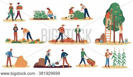 Autumn Harvest. Farm Workers Gathering Crops Ripe Vegetables, Picking Fruits And Berries, Remove Lea