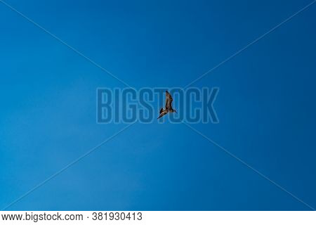 A Seagull Flies In The Blue Cloudless Summer Sky Over The Sea