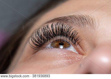Treatment of Eyelash Extension. Lashes. Woman Eyes with Long Eyelashes.