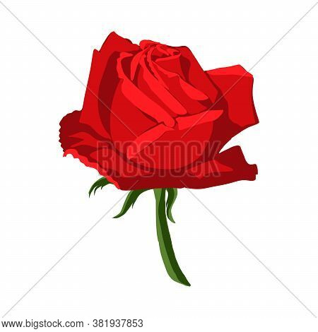 Illustration Insulated Flower Of The Red Rose On White Background. Bud Of A Red Rose, Vector Illustr