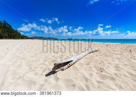 A lone piece of driftwood  on a empty Waimanalo beach in Oahu Hawaii