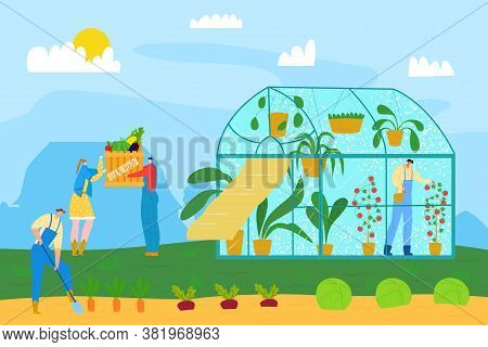 Farming Agriculture Food, Nature Plant Harvest At Greenhouse Garden Vector Illustration. Farmer Peop
