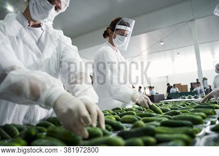 Skilled Workers Sorting Vegetables At A Hypermarket