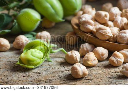 Uncooked Dried Chickpeas In Wooden Spoon With Raw Green Chickpea Pod Plant On Wooden Table. Heap Of