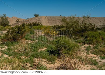 Road Path On The Imperial Sand Dunes On A Cloudless Spring Day With Blue Sky, Featuring Green Vegeta