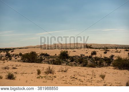 A Sonoran Desert Landscape Featuring Arid Vegetation Consisting Of Bushes And Shrubs  With Sand Dune
