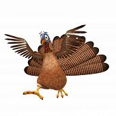Scared Toon Turkey: A cartoon turkey running scared with his wings in the air. Isolated on a white background. poster
