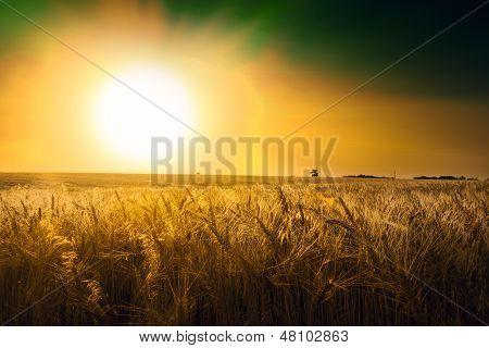 Wheat Field Under Cloudscape