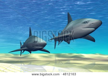 Two sharks on patrol over a sandy reef. poster