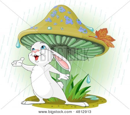 Mushroom Rabbit
