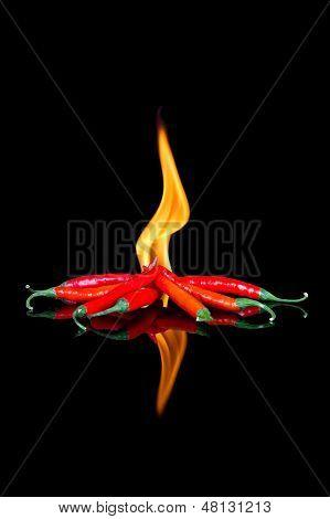 Red Chilli auf schwarze Oberfläche mit Flammen